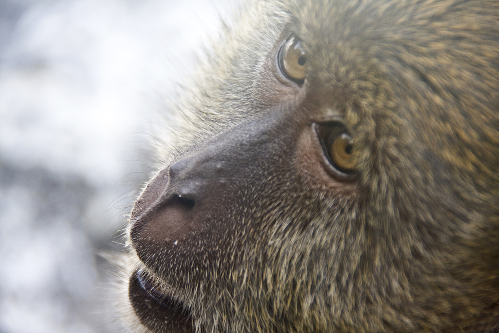 monkeyface.jpg