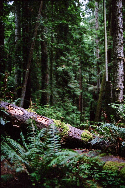 Oregon_0002.jpg
