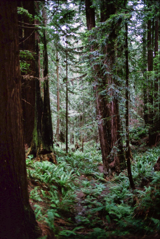 Oregon_0003.jpg