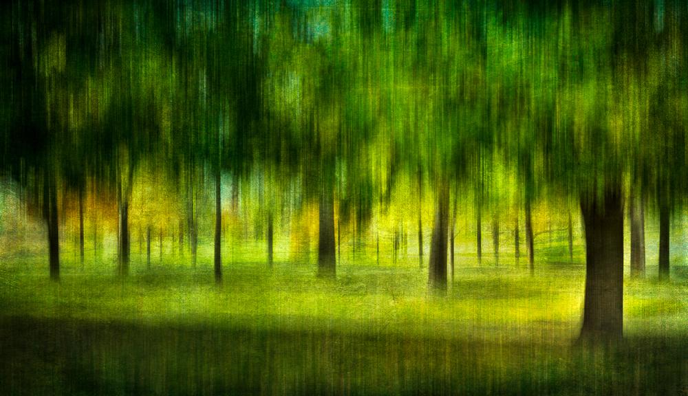 golfcourse tree panoV4Print.jpg