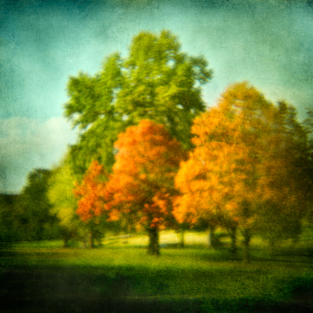 golfcourse trees 1V6.jpg