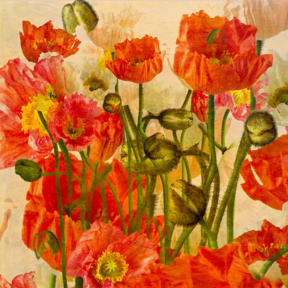 poppies v4L.jpg