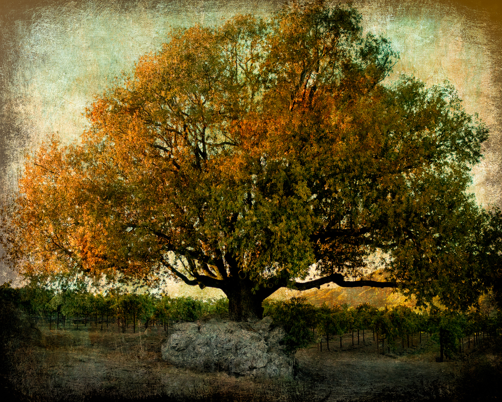 Golden_Tree_and_Stone_finalFlat-Edit.jpg