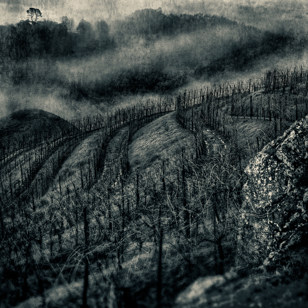 HillVineyardBlueFog.r3-Edit.jpg