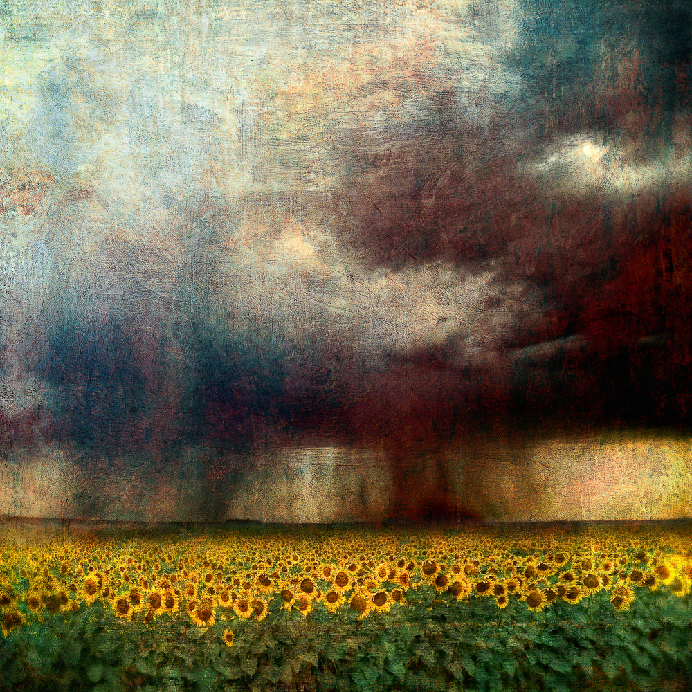 sunflower_storm_sfaprint.jpg