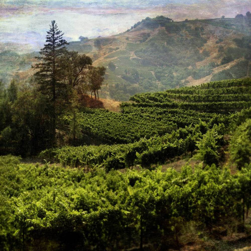 mountain_vineyard_10Flat.jpg