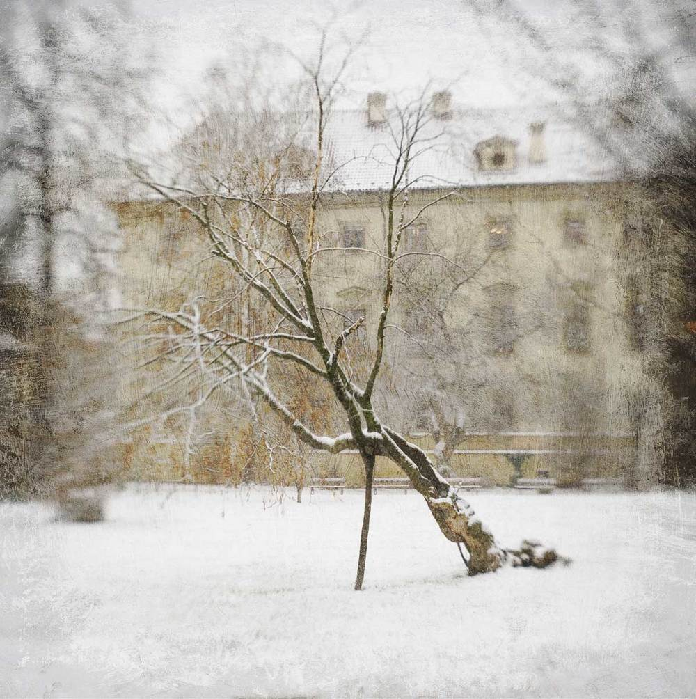 Leaning_Tree.jpg