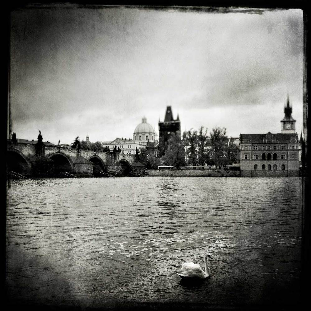lonely_swan_prague_promo.jpg