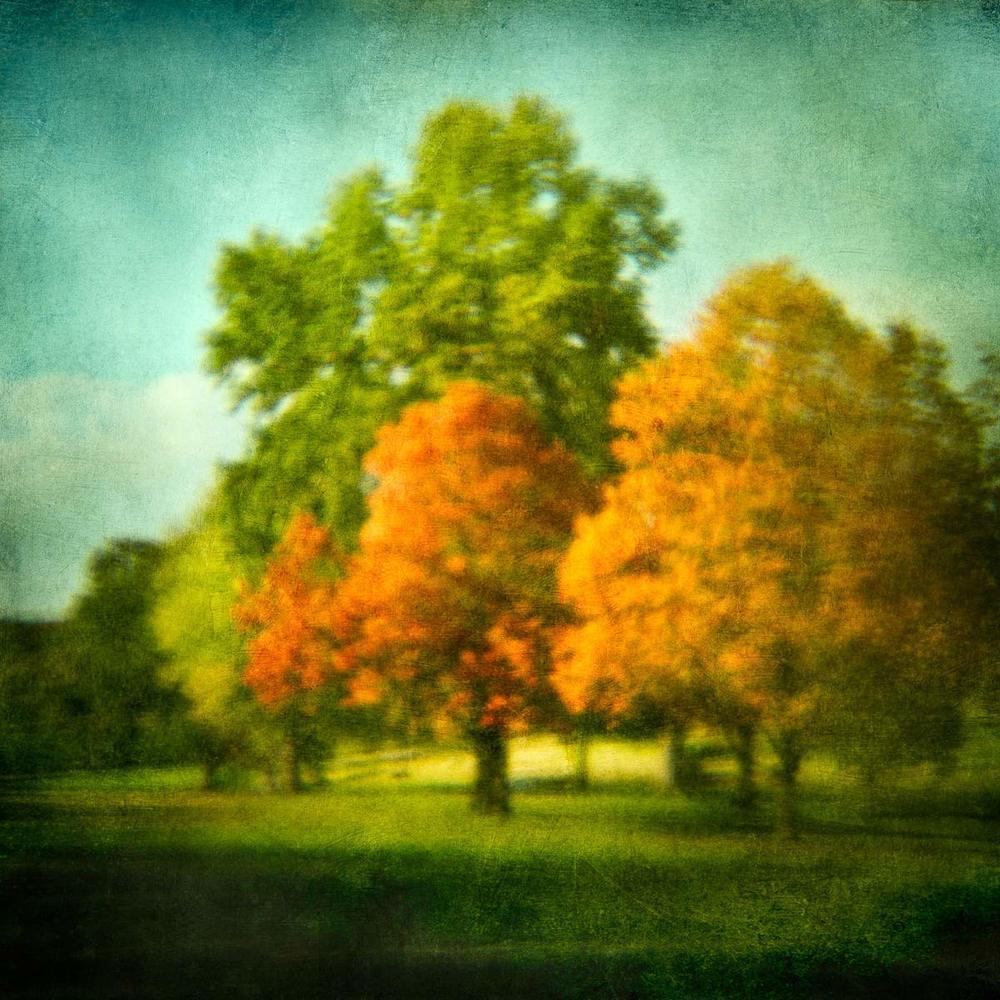 golfcourse-trees-1V6.jpg