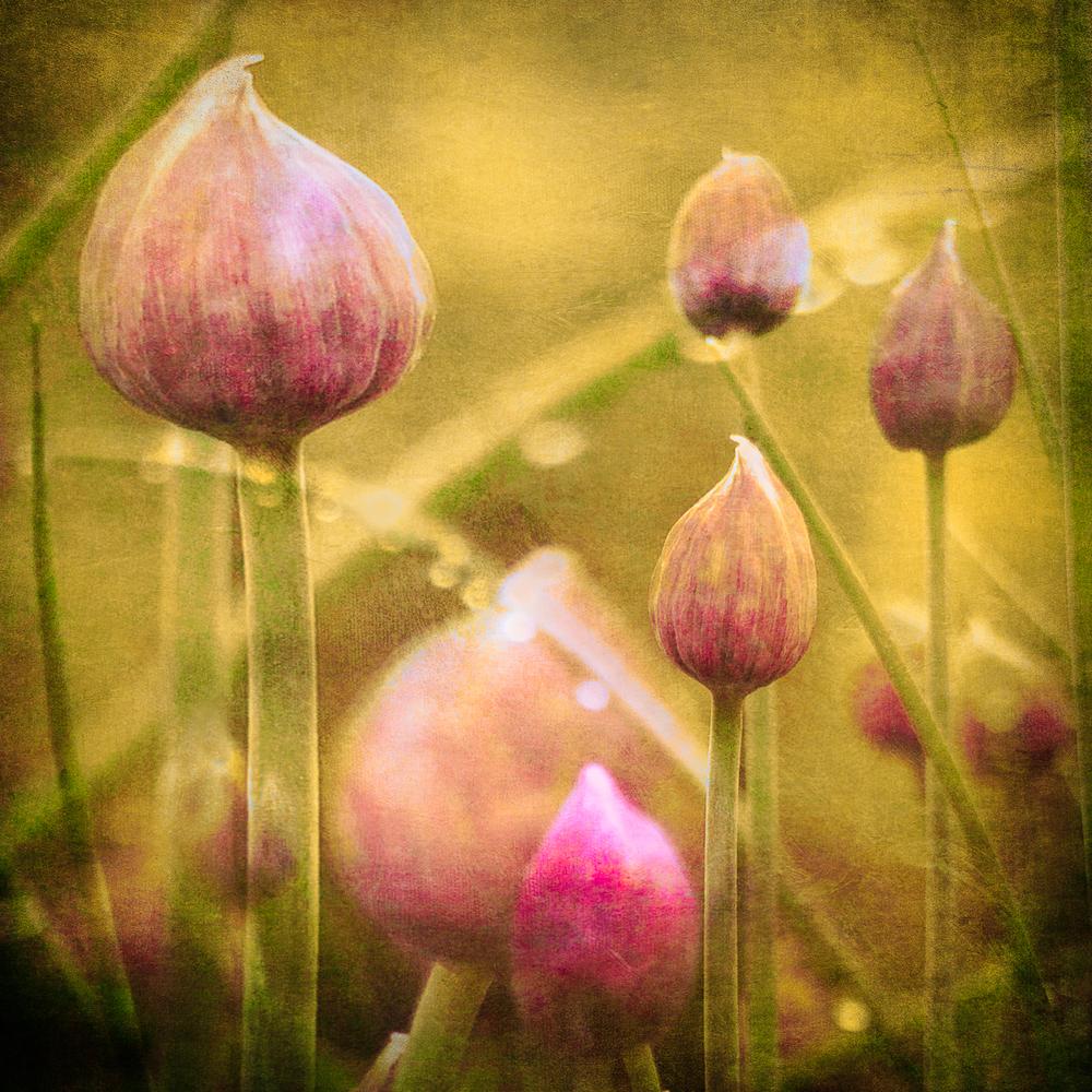 onion_tops.jpg