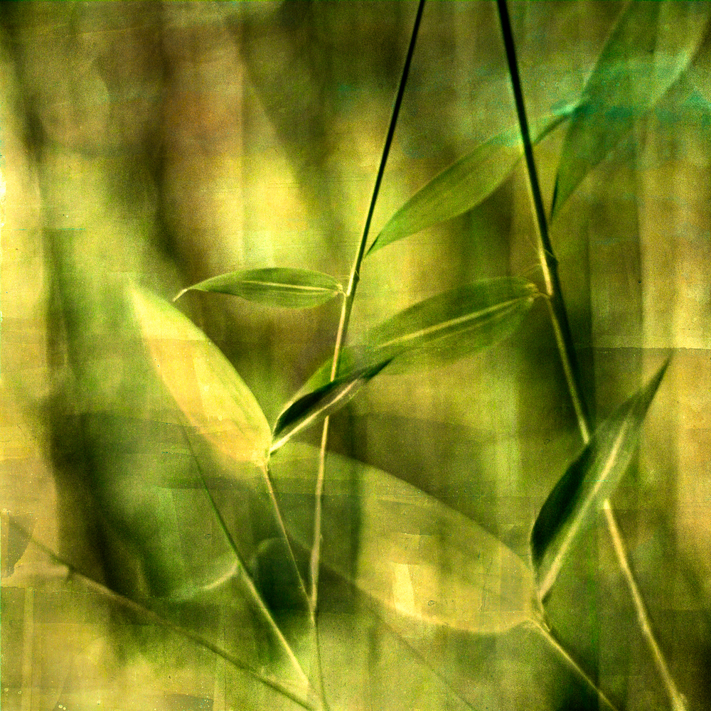 Bamboo_leaves36x36V2psd.jpg