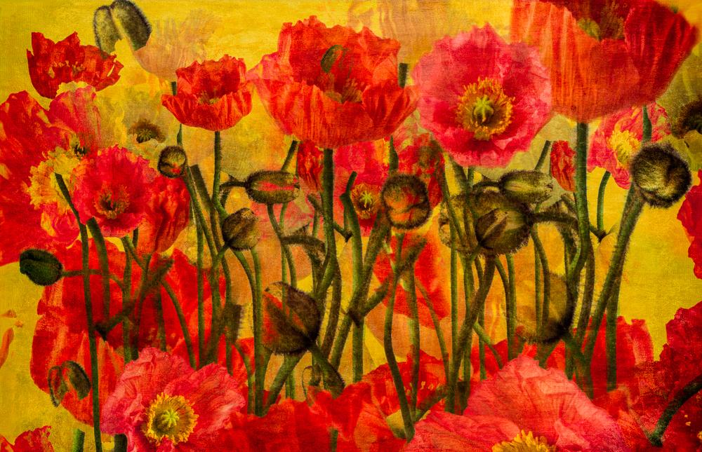 poppies29x45_FlatPrintadj.jpg
