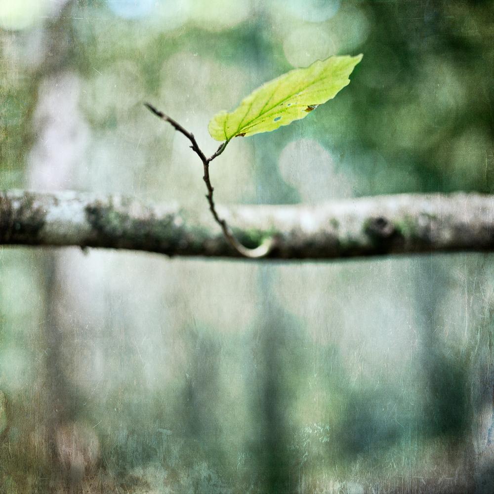 solitary leaf.jpg