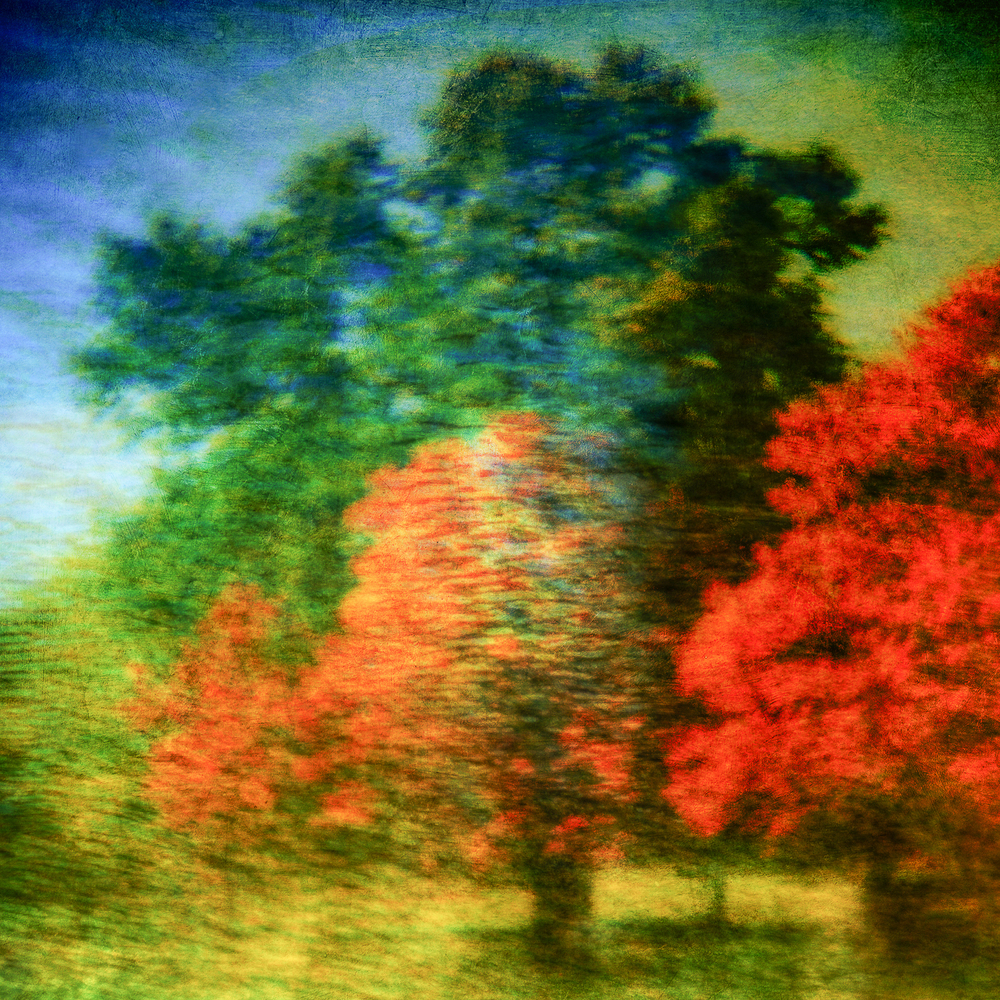 multiple exposure trees.jpg
