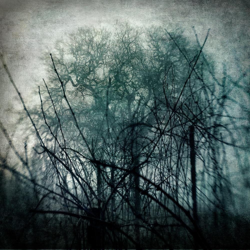 Tree&vine_silhouette_revised36x36Print.jpg