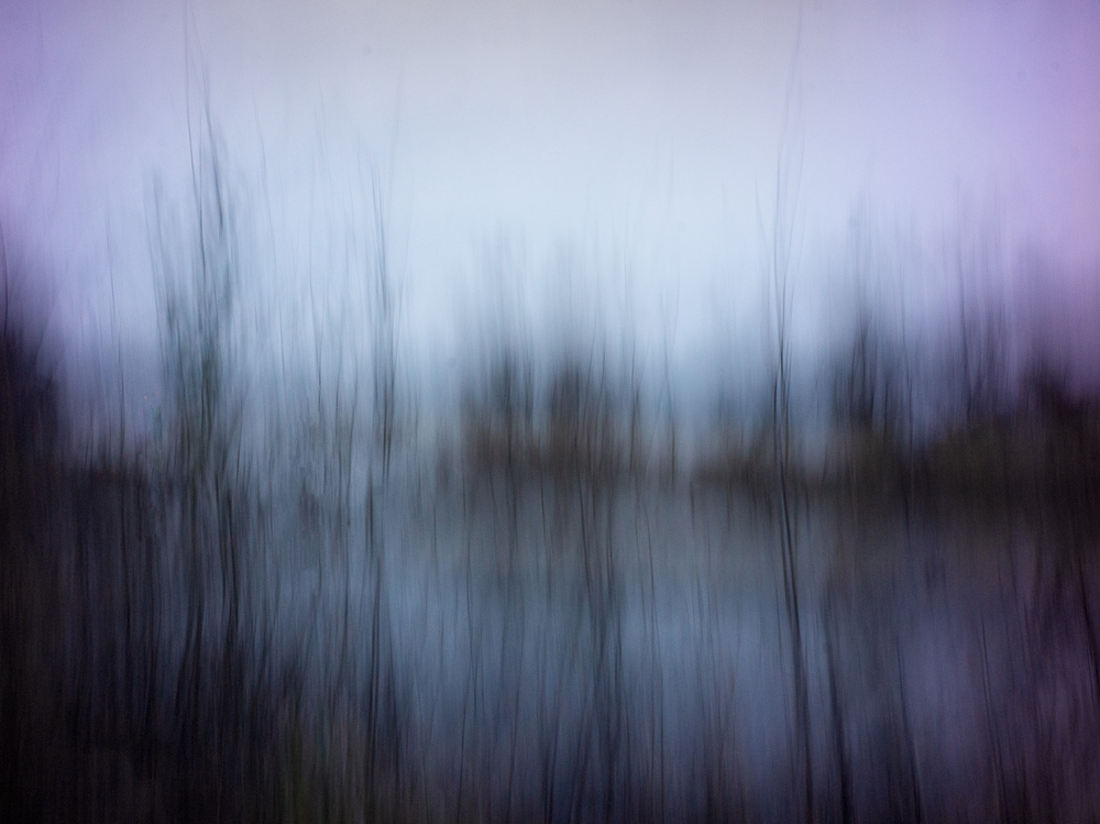 trees rising from the water_36x48.jpg