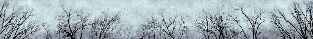 treepano5splittonebirds_softblue.jpg