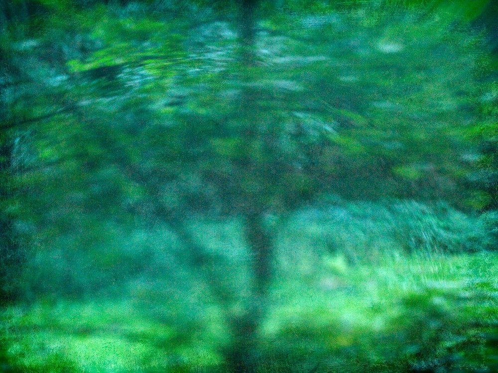 dreamy_tree36x48.jpg