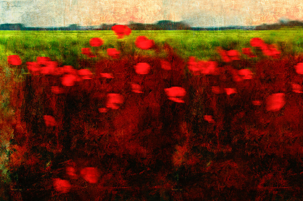 red poppies 24x36.jpg