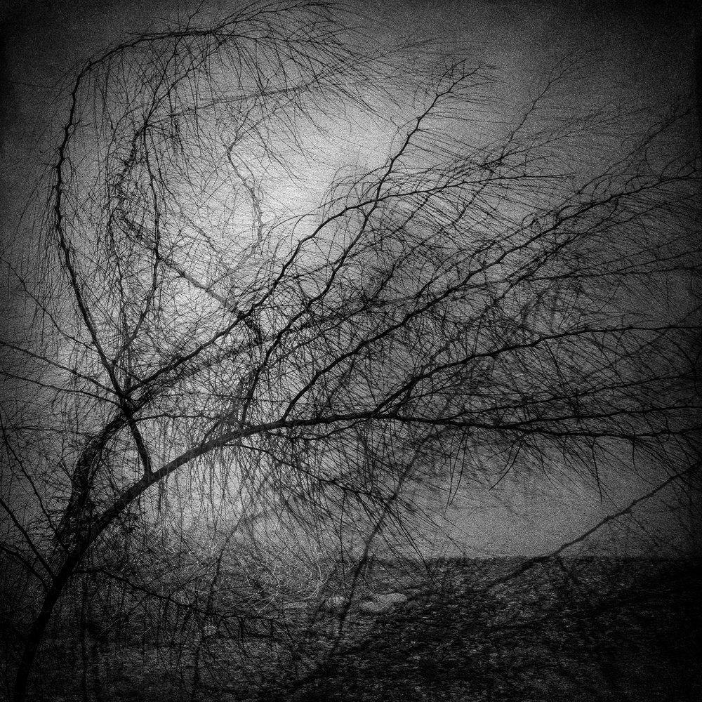 Tree shadows V2.jpg
