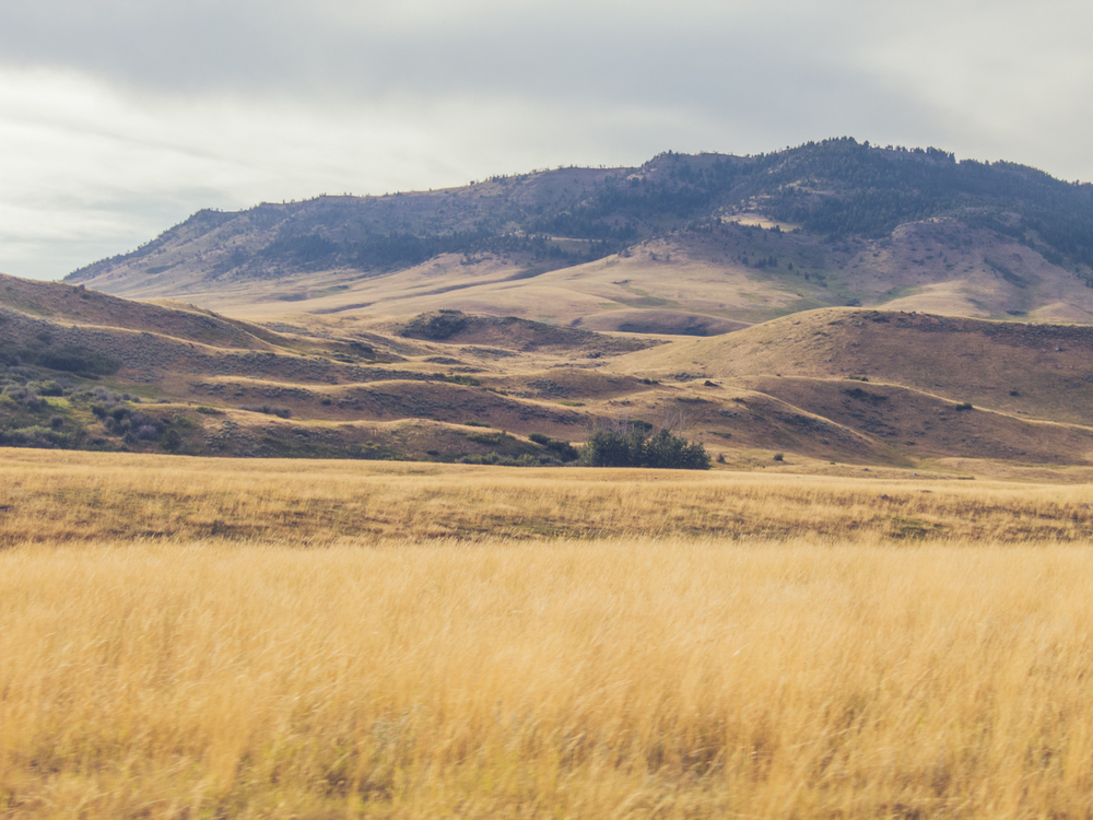 Dispatches-West-IMG_2871.jpg