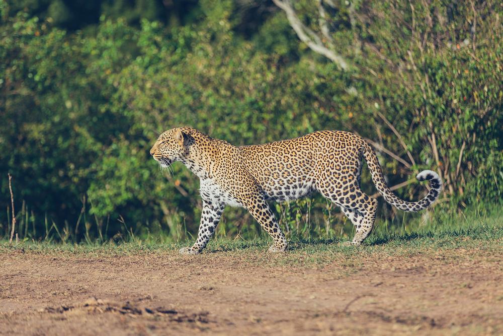 Mara-Day1-_07A1402.jpg