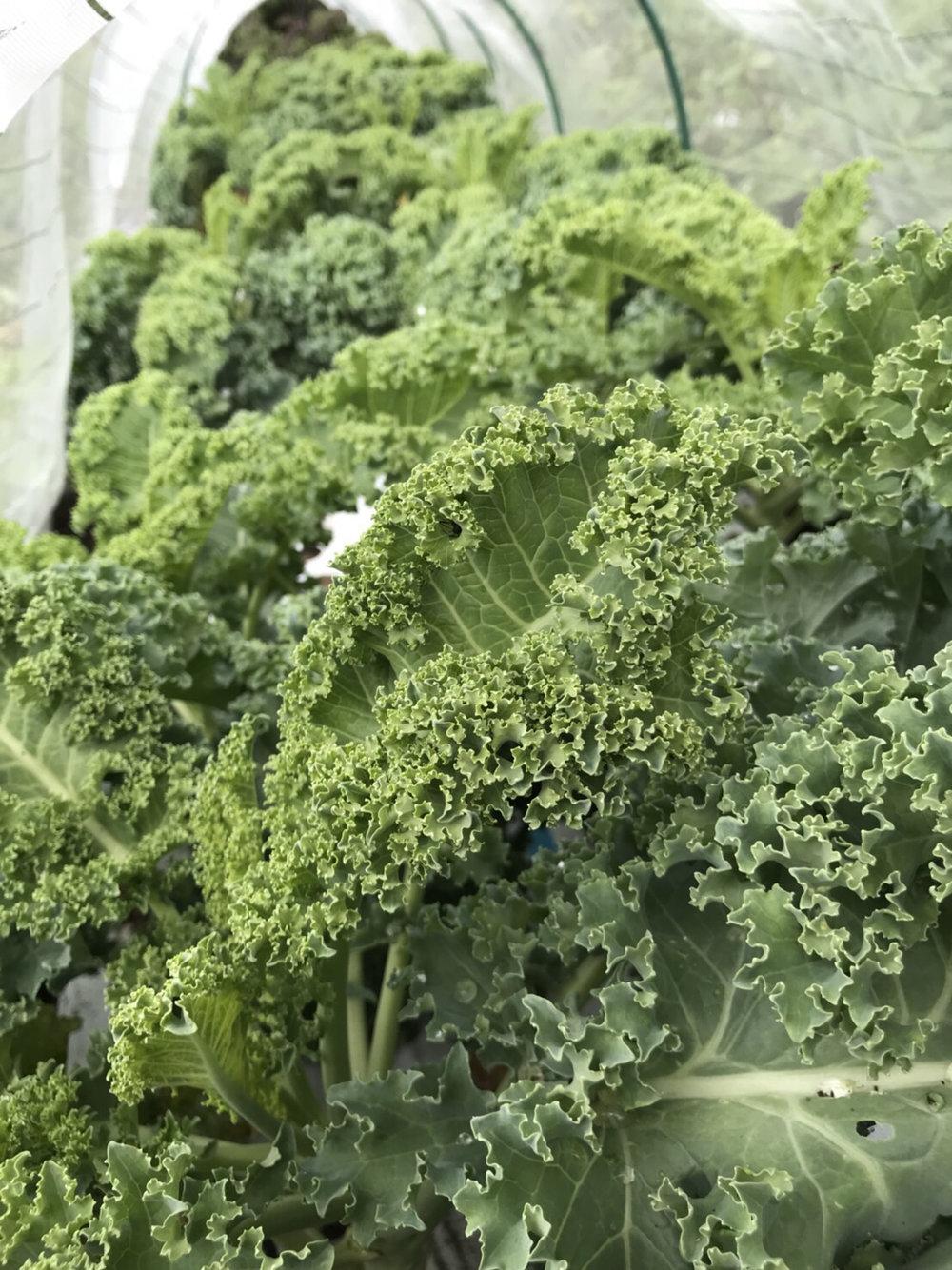 kiyosato-summer-veggies.jpg