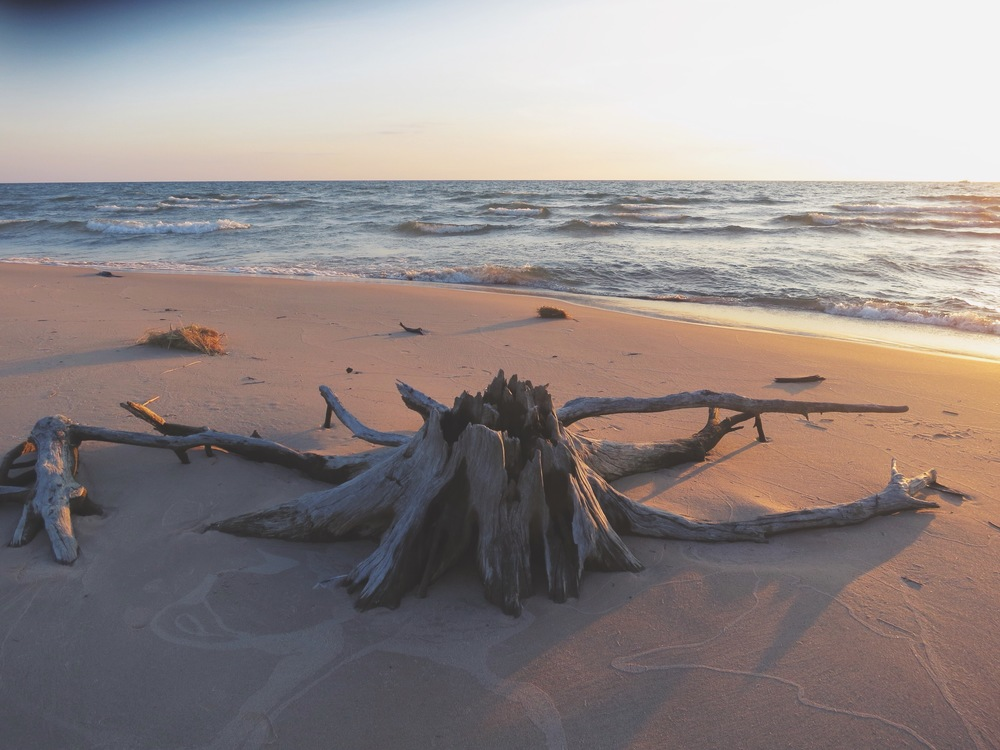 If only I could carry this driftwood home with me...