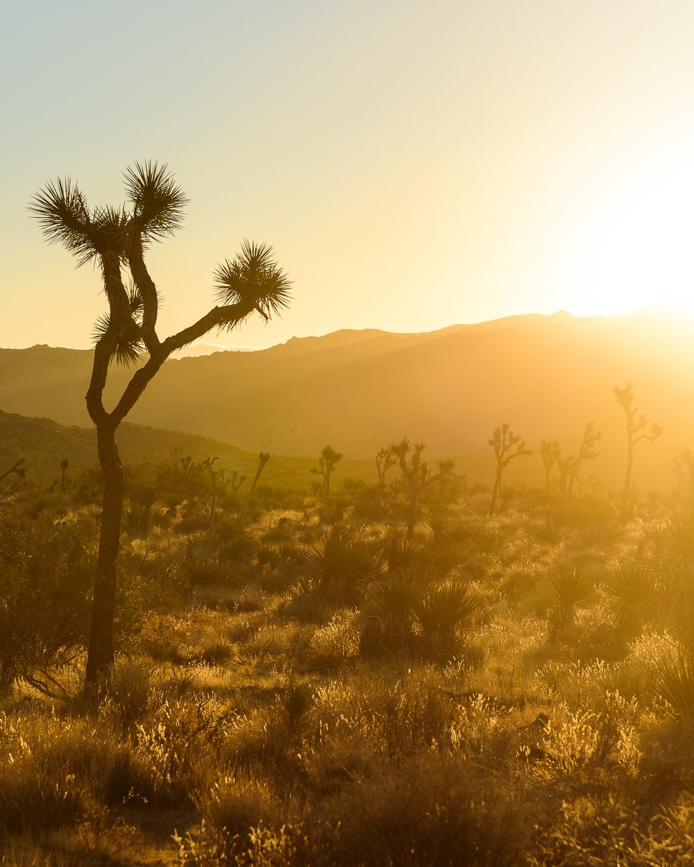 down_dusty_trails_joshua_tree_sunset_glow.jpg