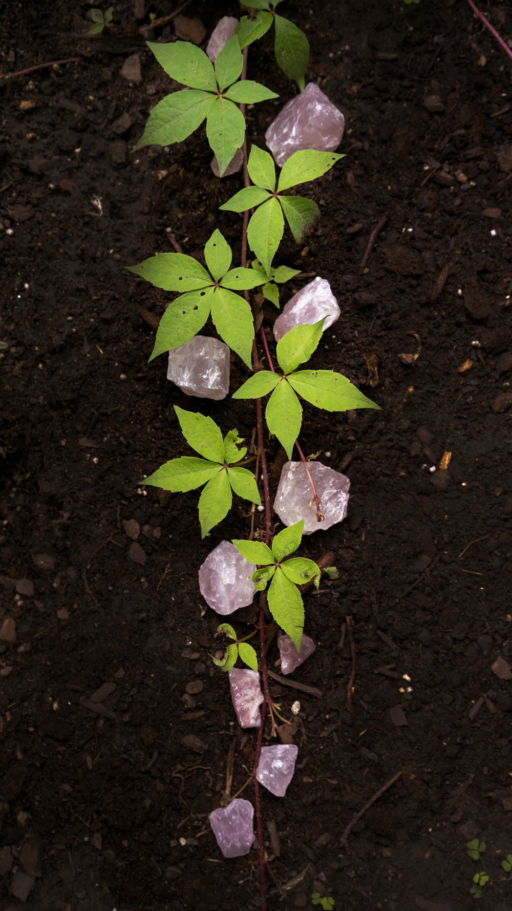 Rose Quartz Vine1.jpg