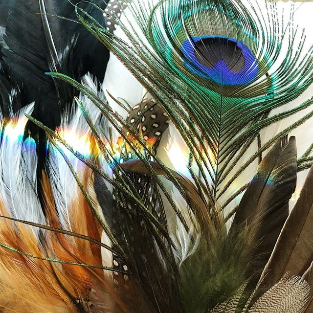 🌈 Smudge feathers charging in rainbow sunlight & ready to work their total lunar eclipse and super blood wolf full moon magic 🌕