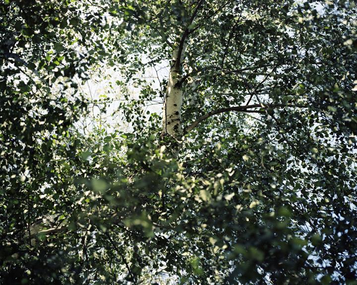 Foliage#101.jpg