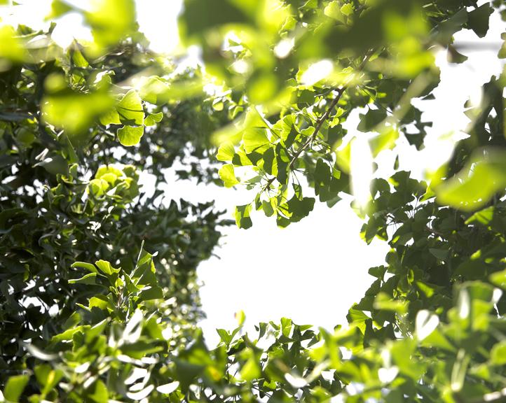 Foliage#105.jpg