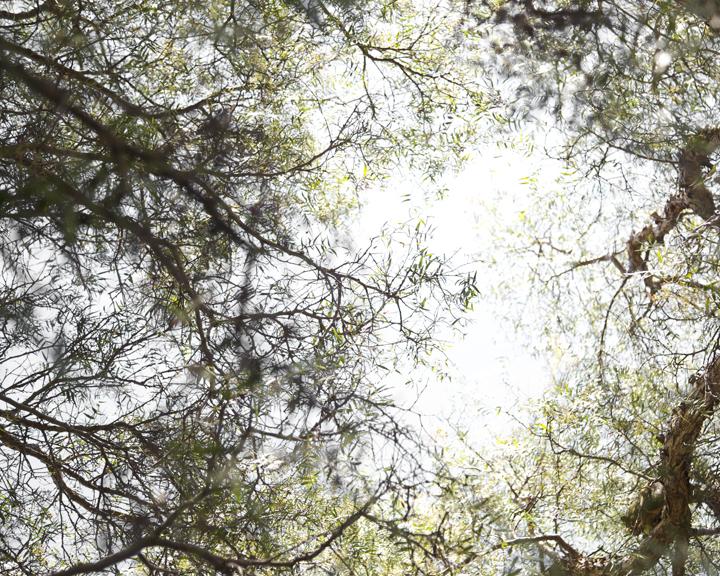 Foliage#102.jpg