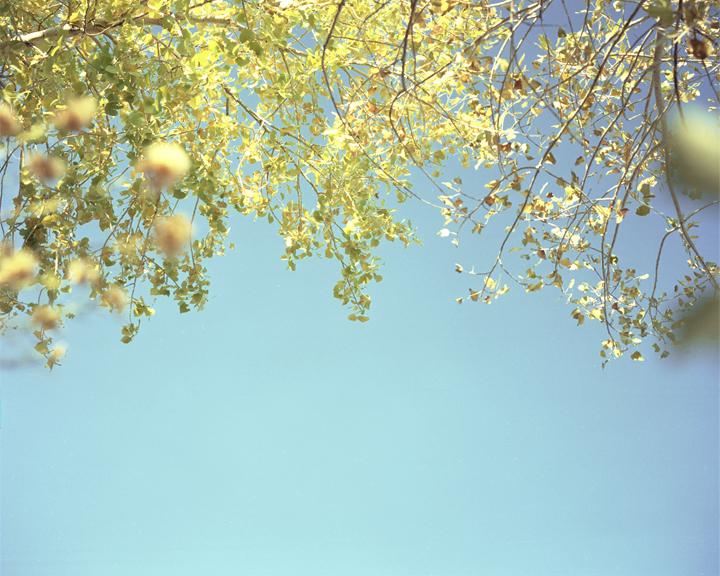 Foliage#113.jpg