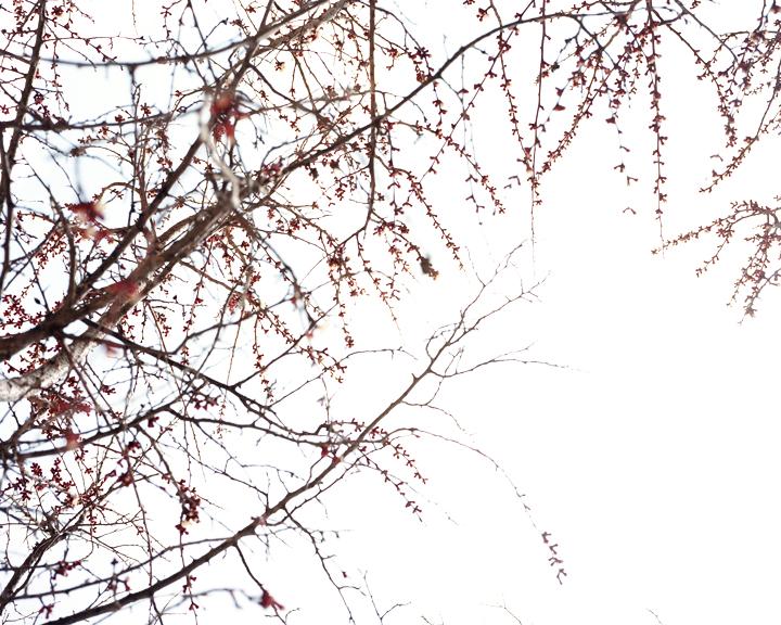 Foliage#115.jpg