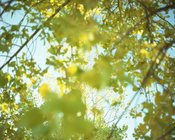 Foliage#112.jpg