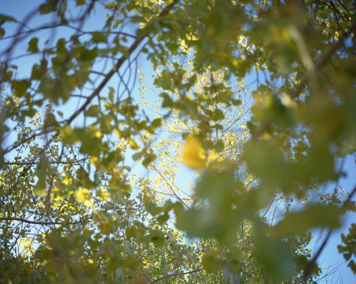 Foliage#107.jpg