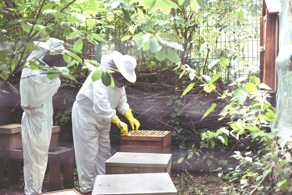HoneyHarvest-50.copy.jpg