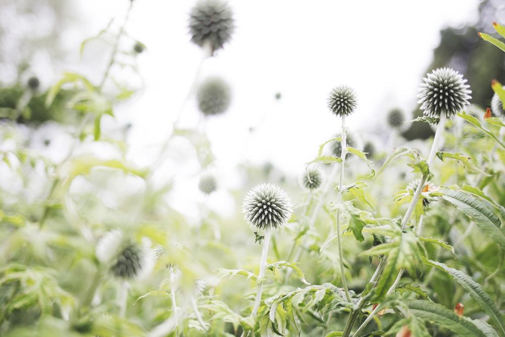 flowers (1 of 18).jpg