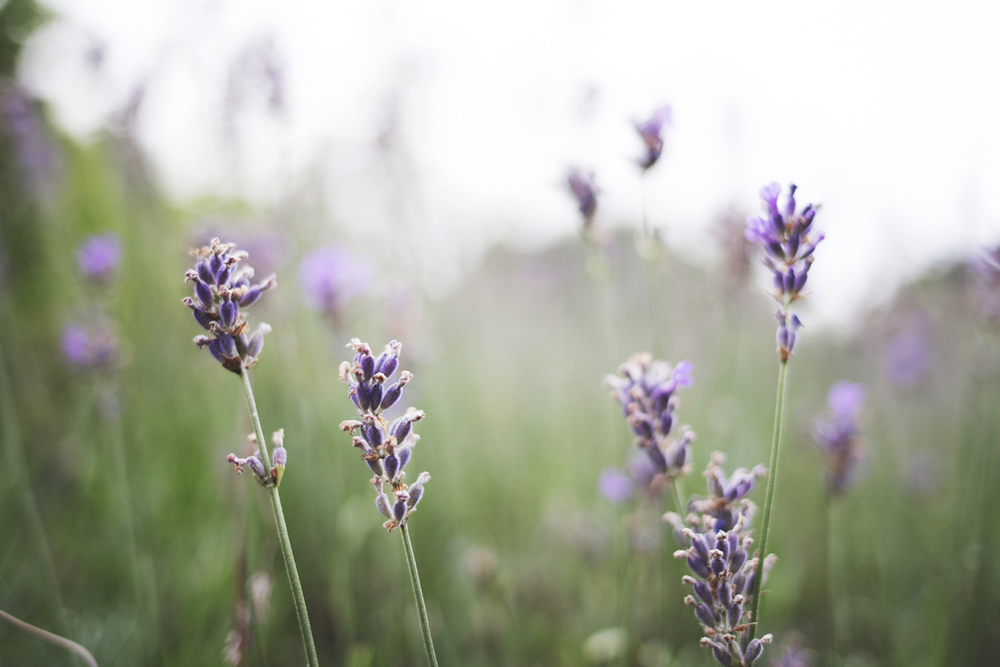 flowers (5 of 18).jpg