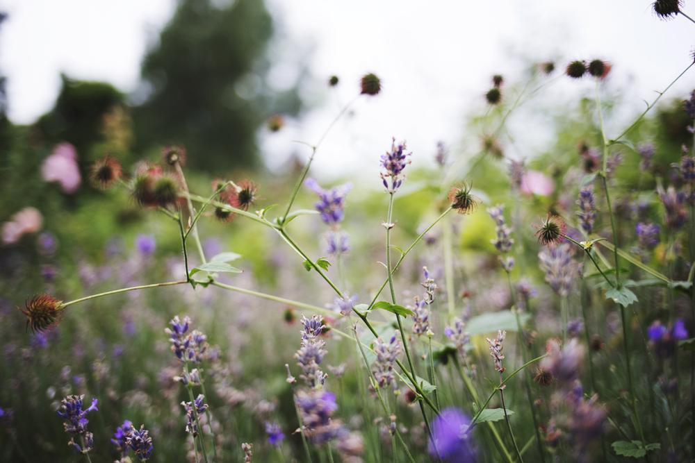 flowers (7 of 18).jpg