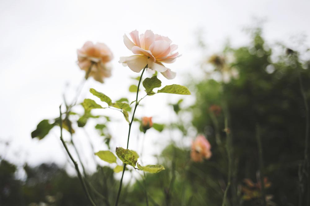flowers (14 of 18).jpg