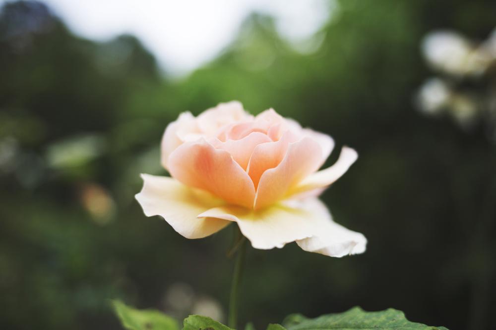 flowers (15 of 18).jpg