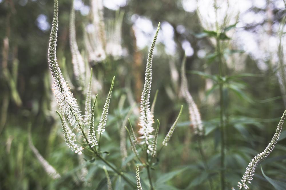 flowers (16 of 18).jpg