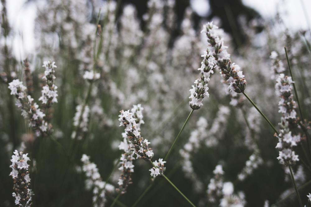 flowers (18 of 18).jpg