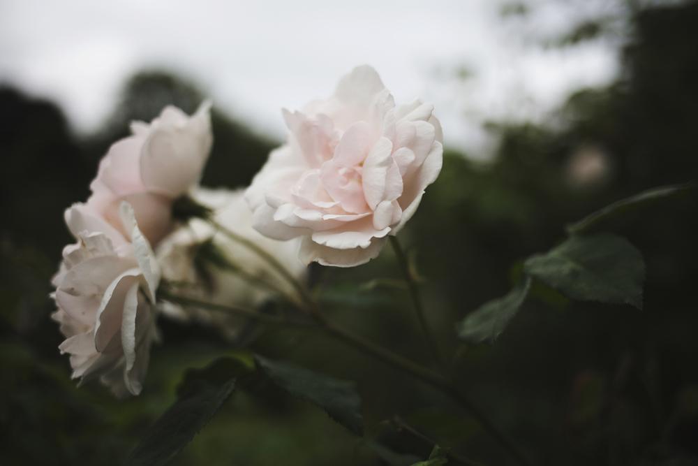 flowers (6 of 18).jpg