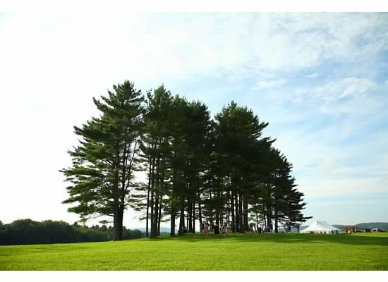 Pines 4.jpg