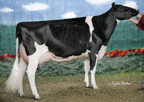 MD-Delight Durham Atlee-ET (EX-92) - 2nd Dam   Dam of Maple-Downs-I G W Atwood and MS Atlees Sht Aftershock