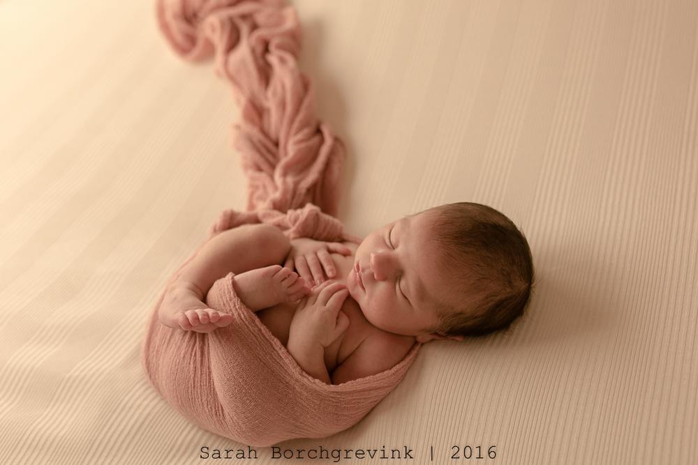 Newborn Photos Cypress
